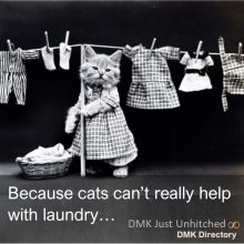 Because cats don't really help with laundry